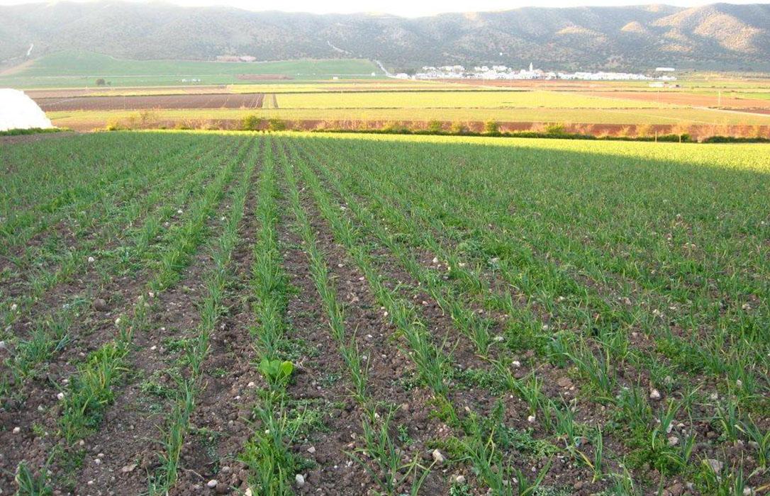 Andalucía inicia un nuevo pago de 43,9 millones a la agricultura ecológica y agroambientales