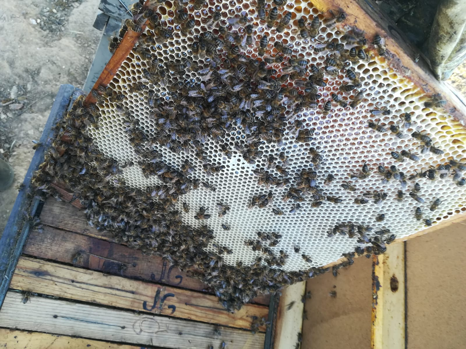 Nuevos atentados contra la apicultura trashumante: Más de diez millones de abejas mueren por asfixia