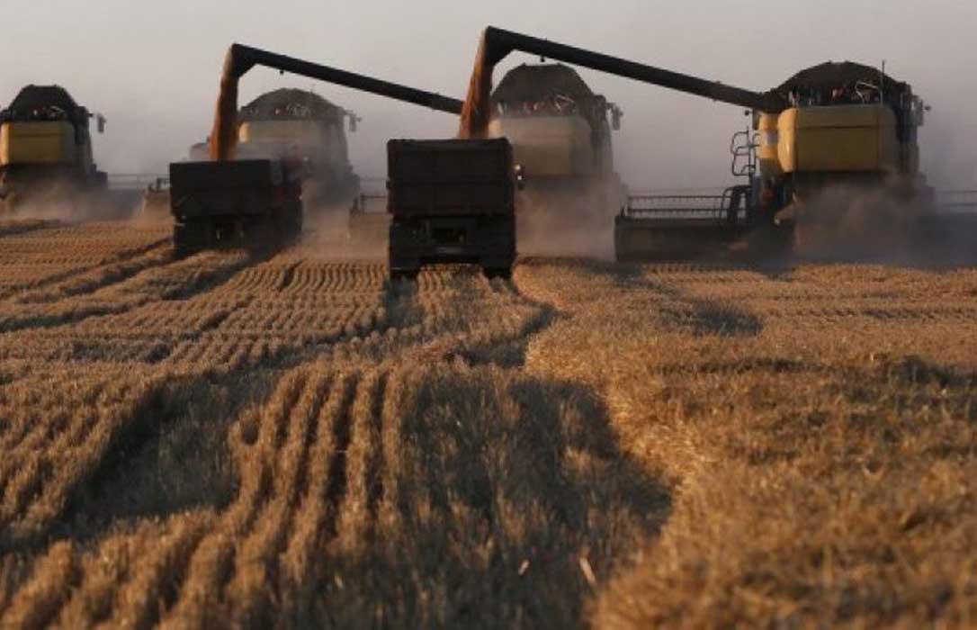 El USDA rebaja la estimación de la cosecha mundial de trigo, aunque aún crecerá un 6% en 2019/2020