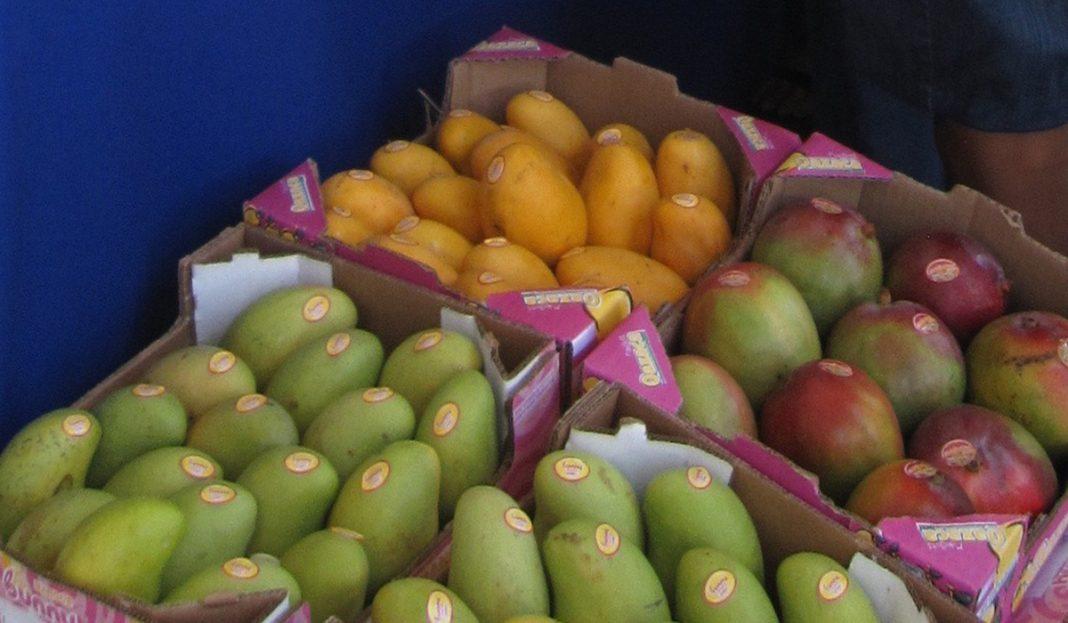El II Congreso Internacional del Mango se centrará en la internacionalización, producción y postcosecha