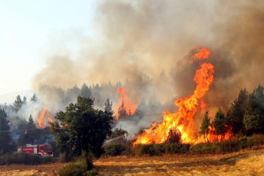Los incendios forestales queman 53.119 hectáreas, casi cinco veces más que en 2018