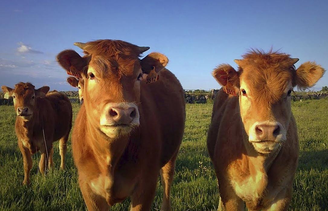 Empieza a ser preocupante el atasco en los precios en la carne de bovino de la Lonja de León
