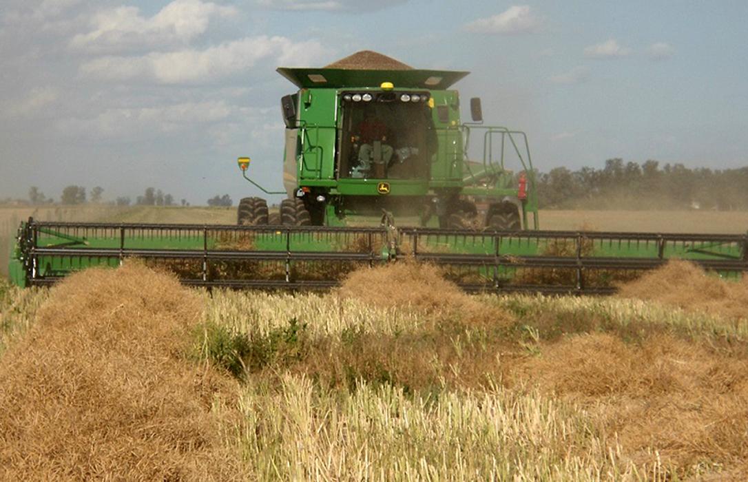 La colza comienza a cotizar a 300 euros en León y la cebada vuelve a la Lonja con los mismos 144 euros