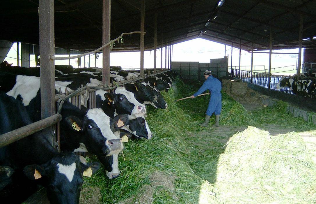Alertan de que las industrias lácteas intentarán repercutir al ganadero los 80 millones la multa de la CNMC