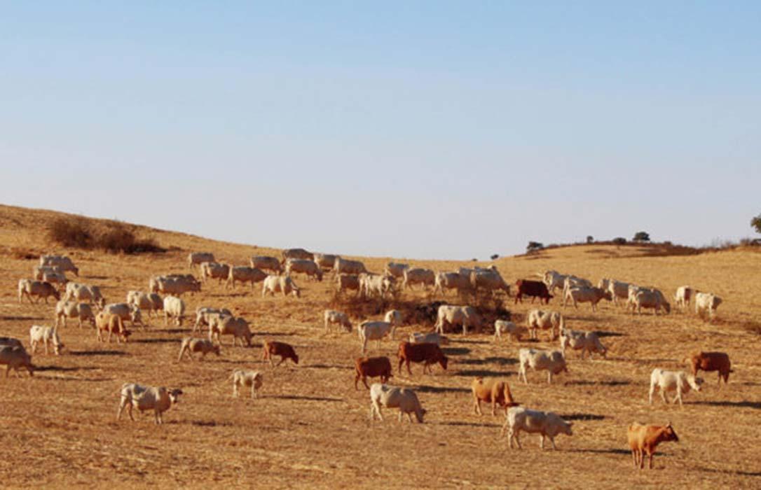 Las indemnizaciones por sequía en los pastos pueden acabar dilucidándose en los tribunales