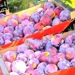 Especulación en el precio de la fruta cuando se está dejando de pagar al agricultor por las piezas de un calibre menor