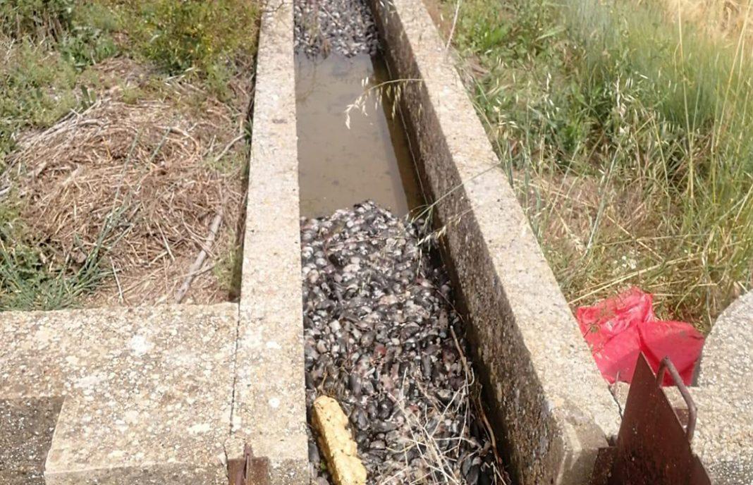 La plaga de topillos ya afecta al 20% de la superficie de Castilla y León y deja 30 millones en pérdidas