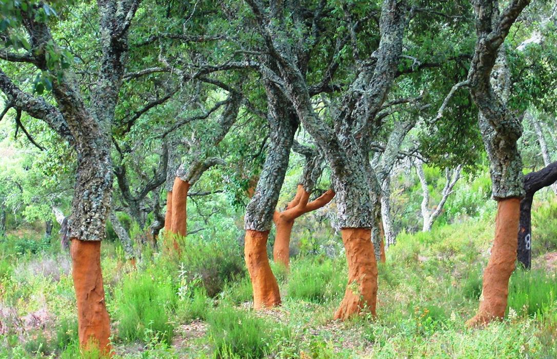 Campaña informativa de Asaja Cádiz para que el sector conozca todos los detalles de las ayudas forestales