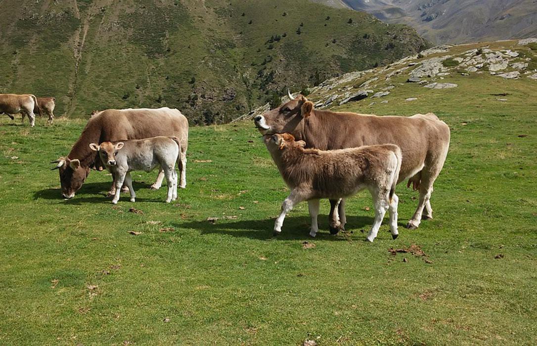Los productores de carne de vacuno de la UE rechazan los acuerdos europeos y en especial el cerrrado con EEUU