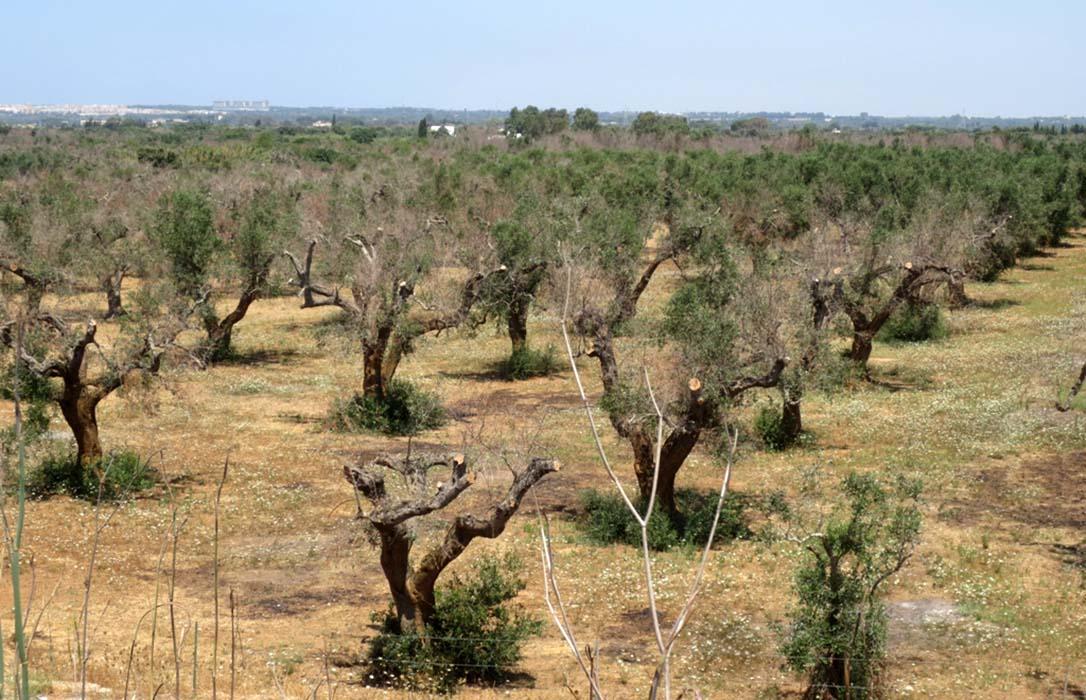 Desde el Parlamento Europeo instan a la CE a tomar medidas urgentes contra la sequía y la crisis del aceite