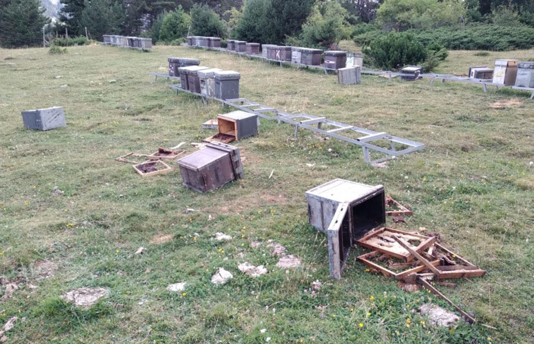Los ataques de osos dejan 80 colmenas destrozadas sin que los apicultores reciban ninguna ayuda
