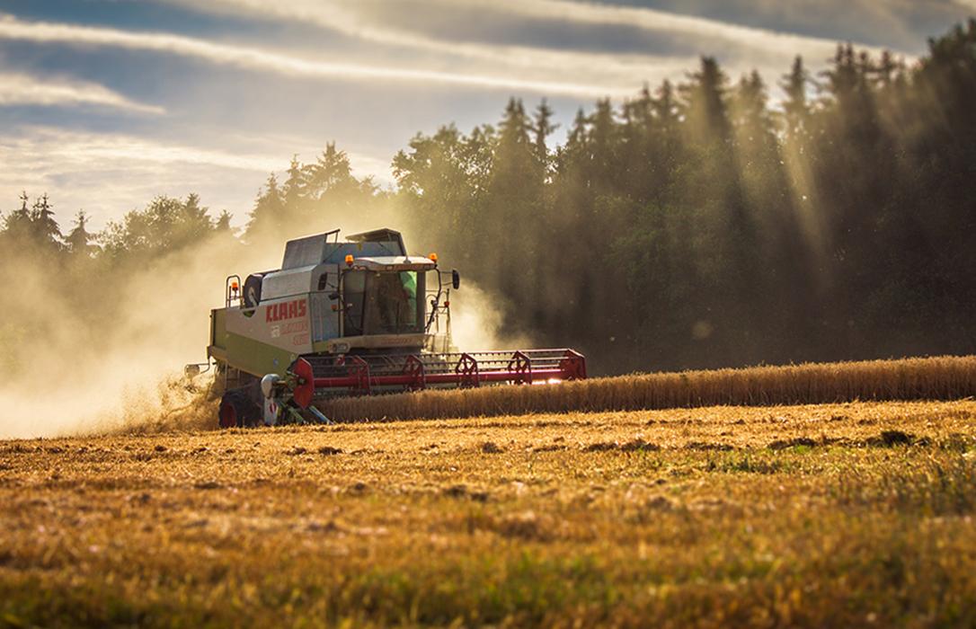 Cambia la tendencia: Subida generalizada en todos los cereales en los mercados mayoristas salvo el trigo blando, que repite