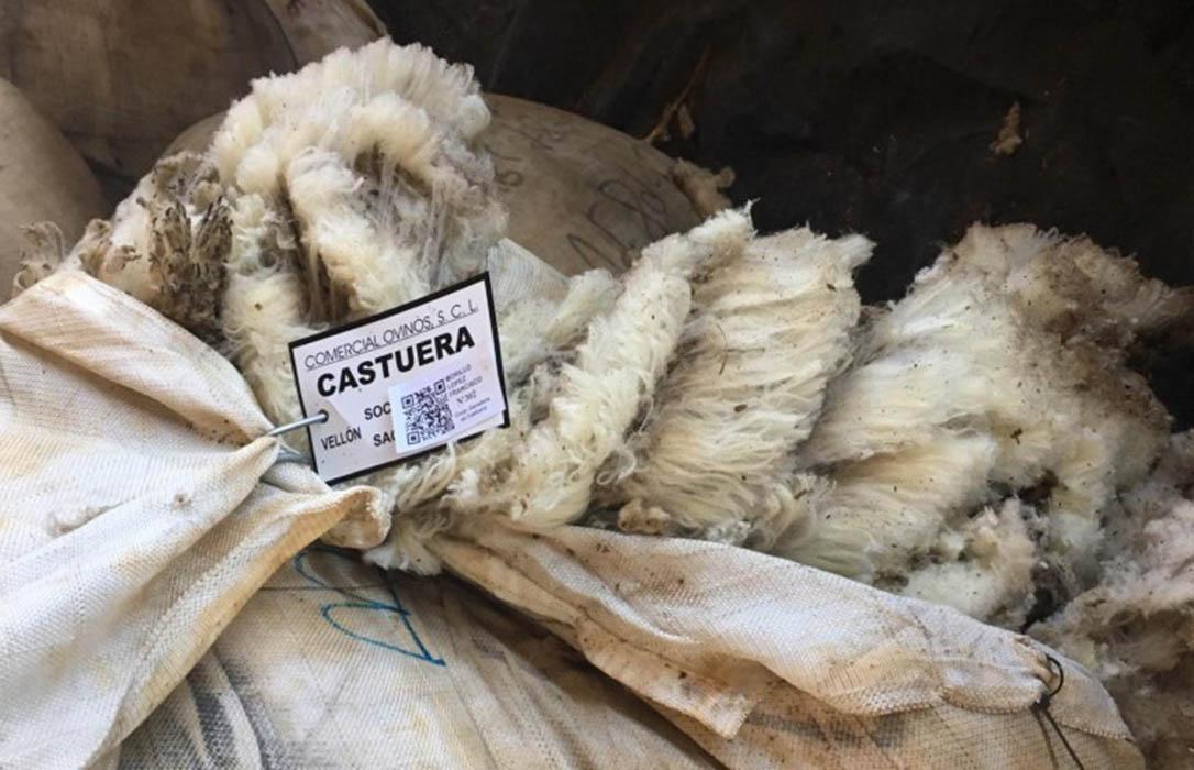 Filotat adquiere y adapta tecnologías para agilizar la toma de muestras y análisis de las partidas de lana