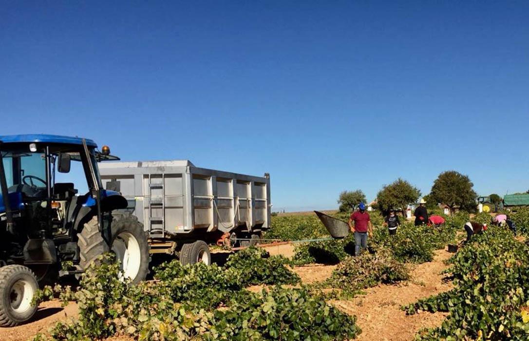 Cuidado con los impagos de la uva: Alertan para que no la entreguen sin los contratos cumplimentados y firmados