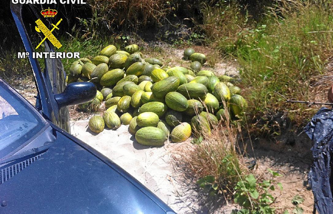 La Guardia Civil devuelve a sus propietarios 700 kilos de melones robados tras detener a siete personas