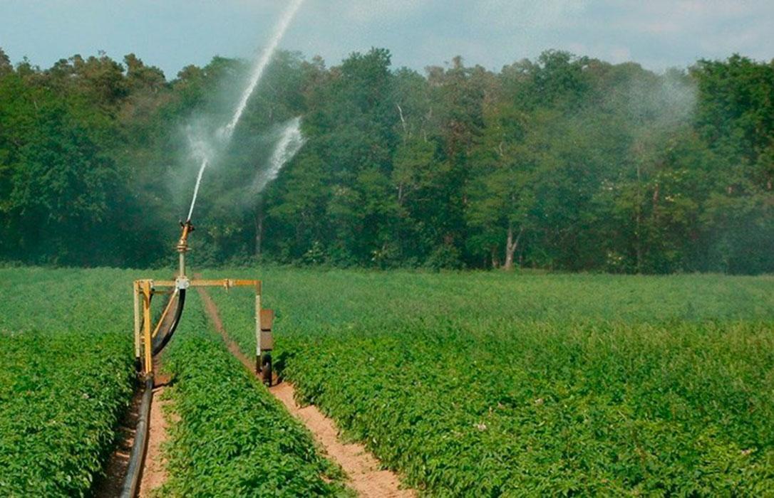 El otro coste de la ola de calor: Los agricultores deben asumir sobrecostes en riegos y tratamientos contra plagas