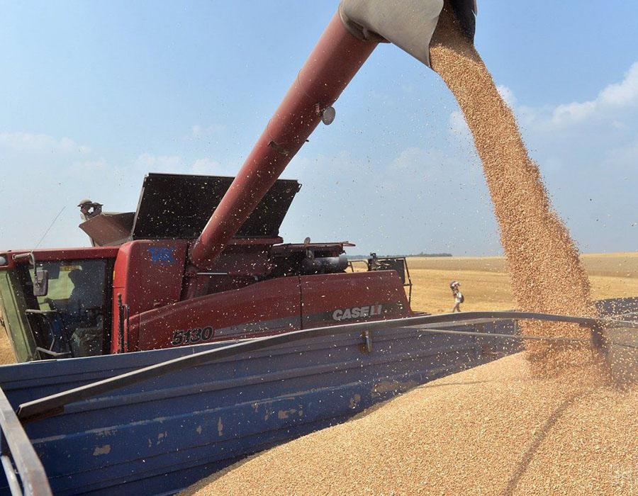 EE.UU. confirma una subida del 5% de la cosecha mundial de trigo, aunque menos de lo previsto inicialmente