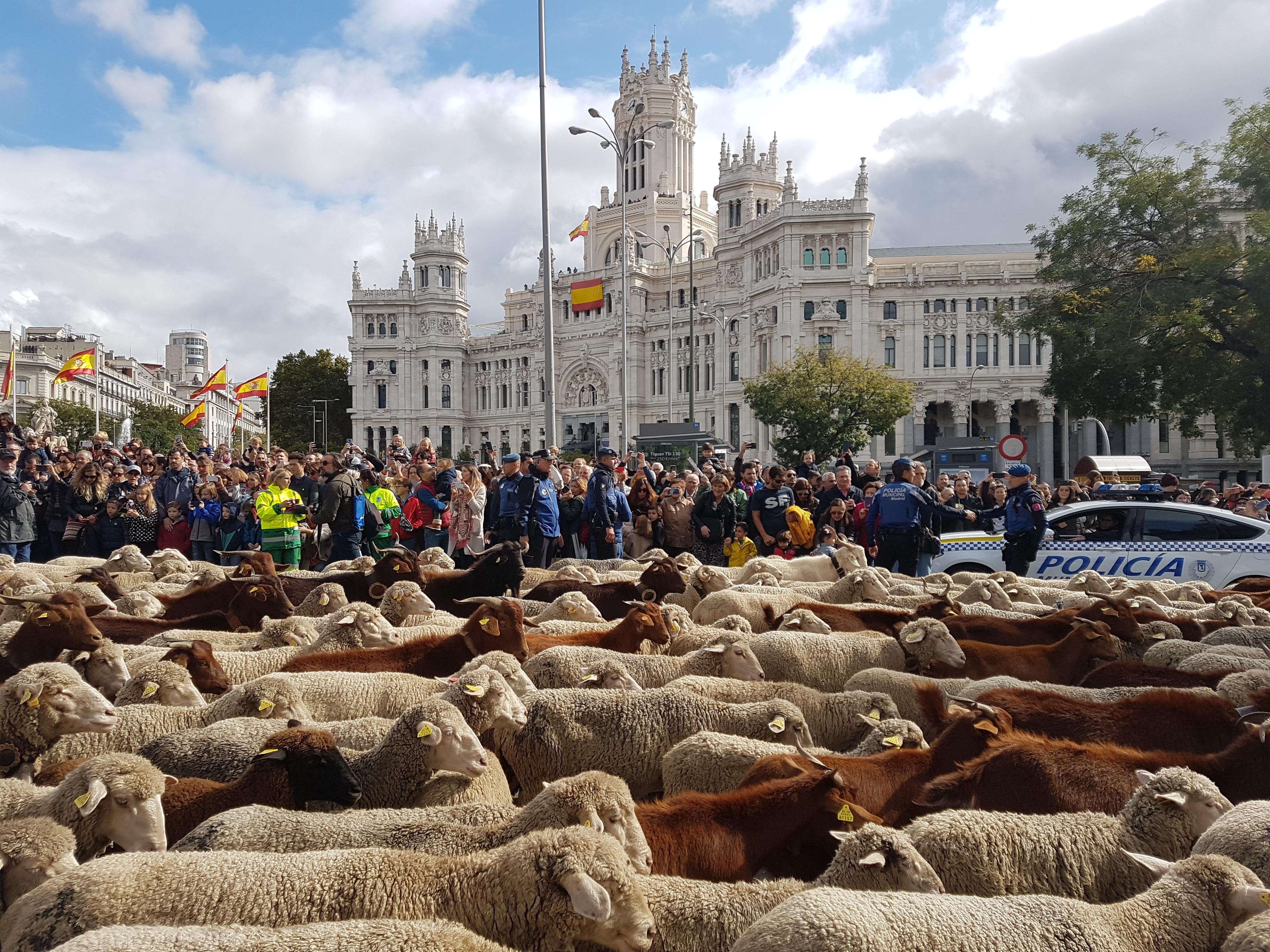 La ciudad y el campo se dan la mano en una nueva edición de la Fiesta de la Trashumancia en Madrid