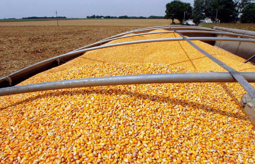 León sigue batiendo récords al alcanzar las 75.000 hectáreas de siembra de maíz
