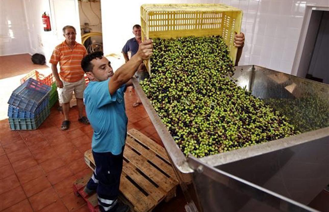 Un mal escenario: El primer aforo del aceite prevé una caída de la producción del 32,7% en Andalucía