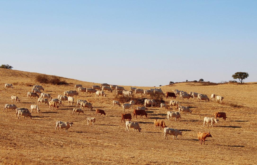 Denuncian que el seguro de pastos no funciona y no cubre las necesidades de los ganaderos