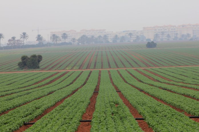 El sector agrario rechaza que se le acuse de ser el responsable de la contaminación del Mar Menor