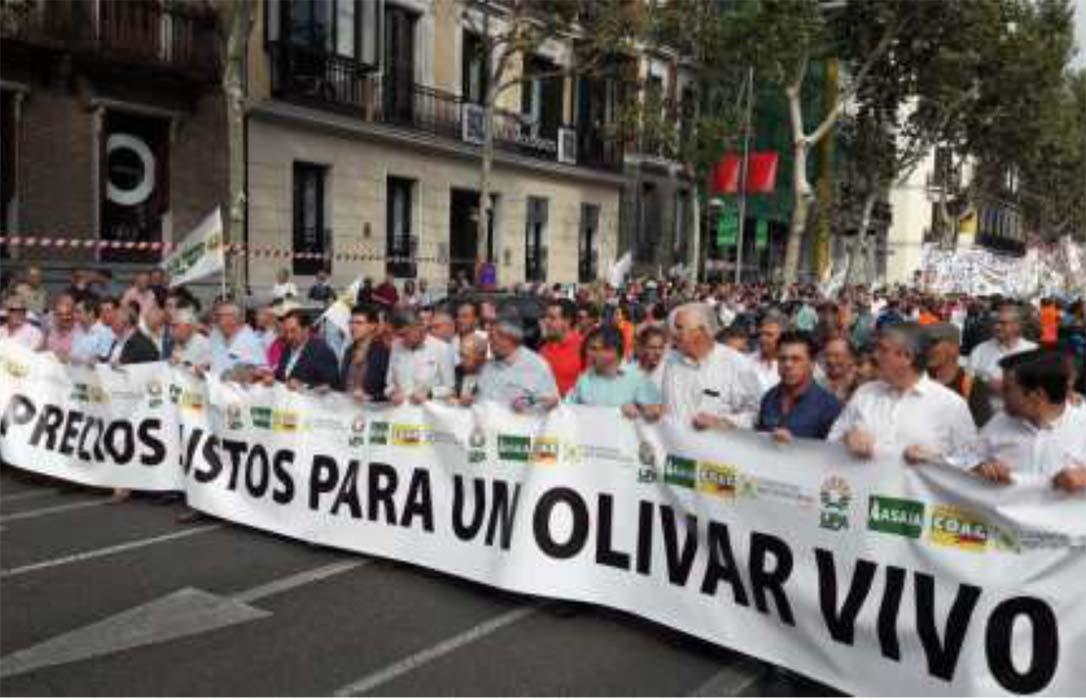 """Aceite de oliva """"low cost"""": Una carrera hacia el abismo"""