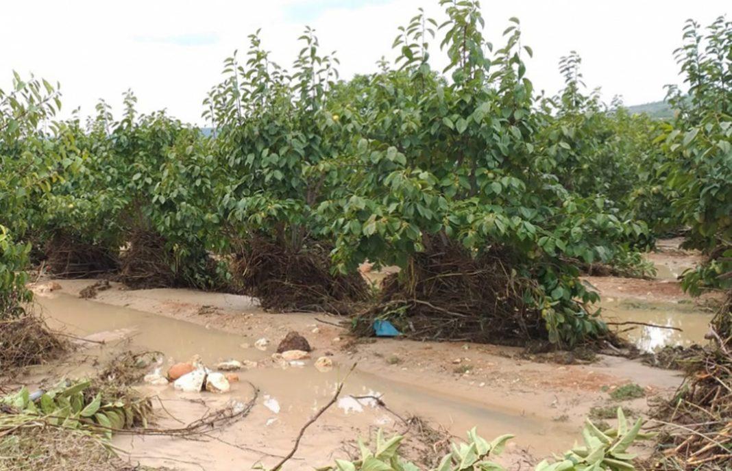 Denuncian que dos meses después de prometer ayudas por la gota fría nada ha llegado a los agricultores afectados