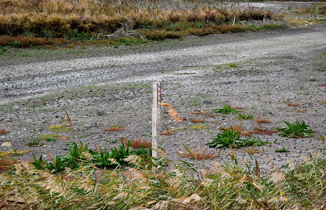 Las Tablas de Daimiel solo tiene el 5% de su superficie inundada: Los empresarios de turismo apoyan el trasvase del Tajo