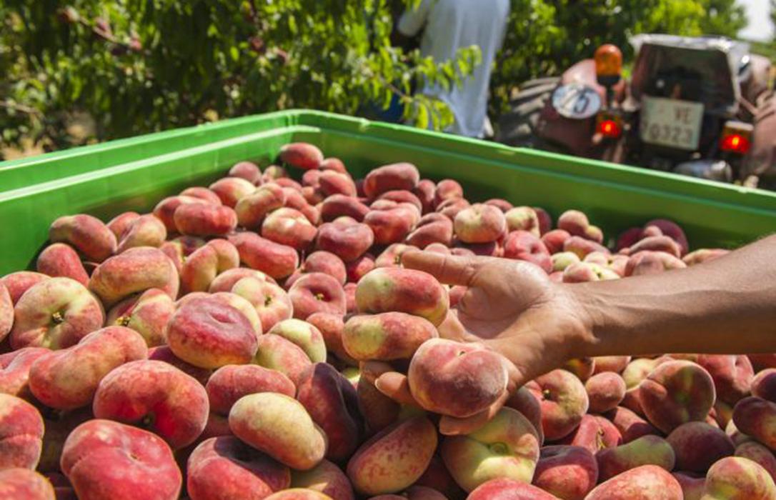 La Rioja, Aragón, Navarra y Cataluña se unen para salvar al sector de la fruta de hueso y la ganadería extensiva en el Valle del Ebro