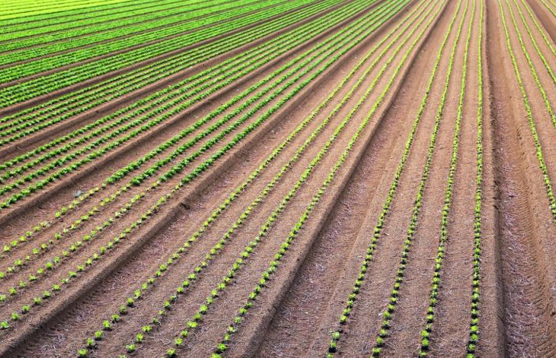Futuro de la PAC: Reducir el 15% de los fondos de desarrollo rural, dificultará cumplir con los objetivos climáticos del Pacto Verde Europeo