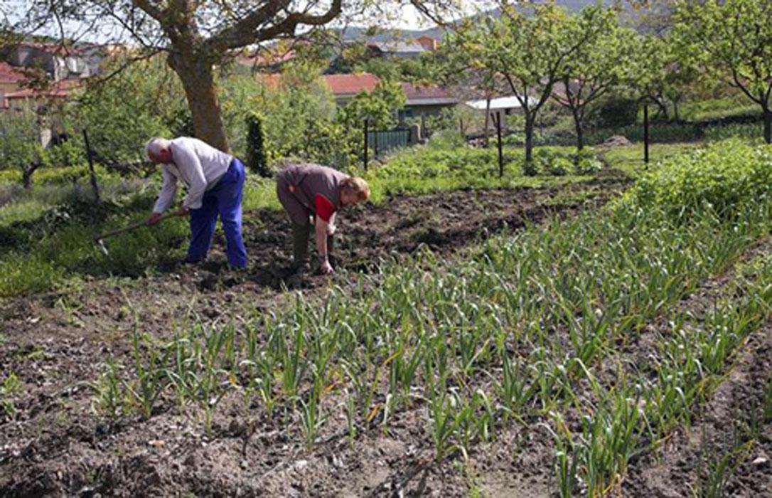 Correos Market se abre aún más al mundo rural al incluir productos frescos y acercar el campo a la mesa