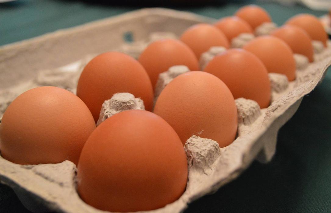 La Gente del Huevo: Los profesionales explican su trabajo en el proceso de producción, comercialización y transformación