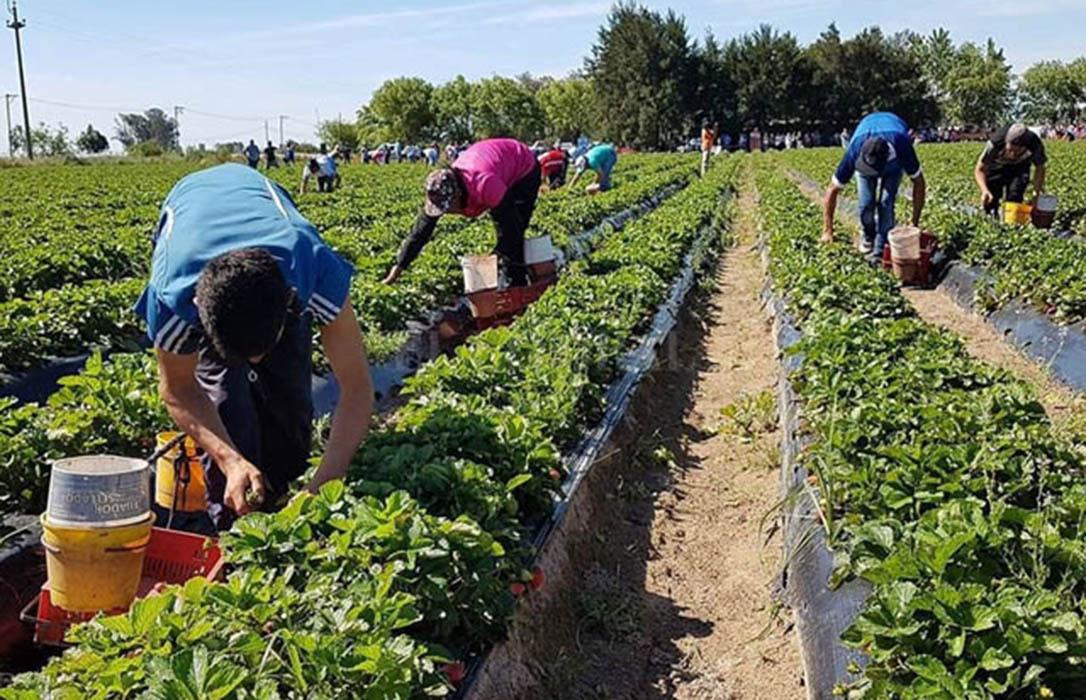 UPA y COAG firman la actualización del Convenio del Campo de Sevilla, que incluye la subida del Salario Mínimo en 2020