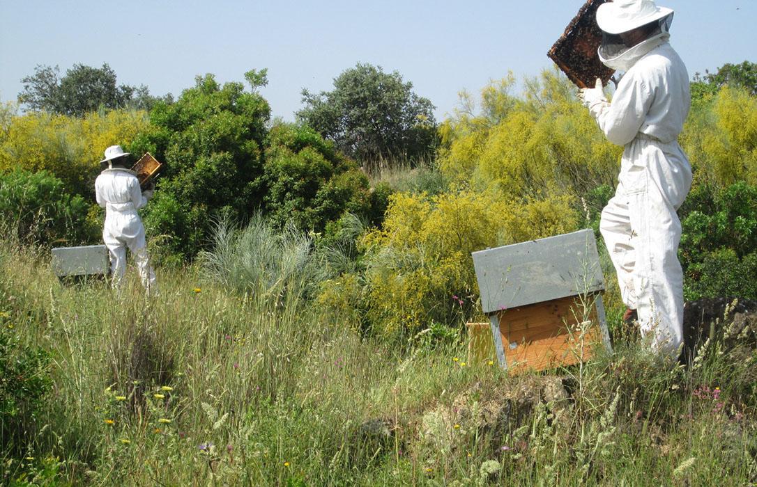 """Crece la incidencia de la varroa por falta de lluvias y altas temperaturas y augura una campaña """"desastrosa"""""""