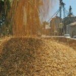 ENTREVISTA. ACCOE: «El operador, no impone el precio final, por eso recomendamos la venta escalonada del cereal»