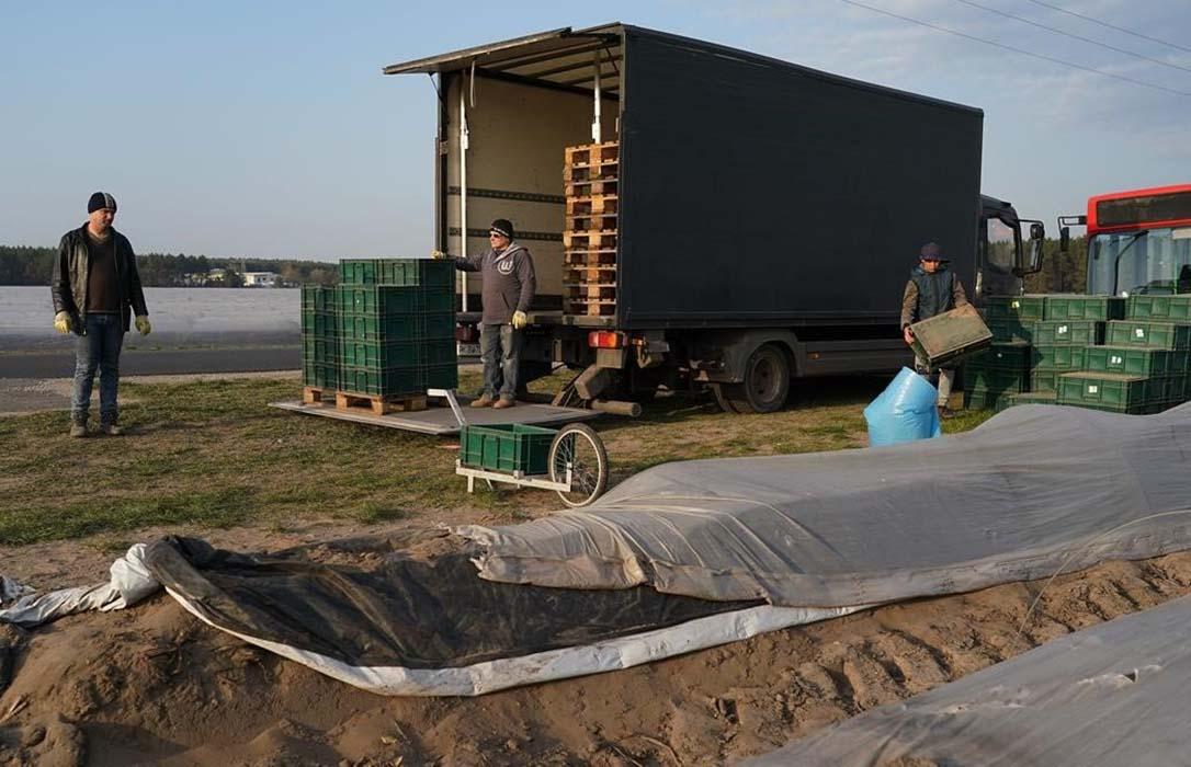 Alemania sí admitirá un cupo limitado de temporeros de la UE para sus campañas agrícolas pese al cierre de fronteras