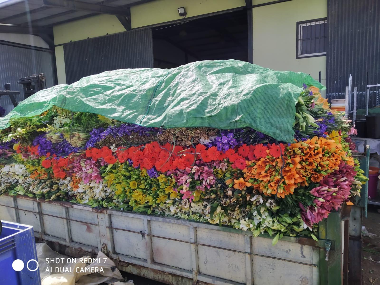 Abierto el plazo a la consulta pública sobre las ayudas a productores de flor cortada y planta ornamental