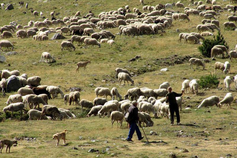 Paquete de medidas de la UE:  Ayuda al almacenamiento de ovino, caprino, vacuno y lácteos y retirar flores y patatas