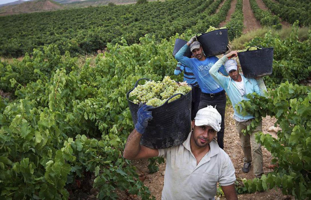 Acusan al Gobierno de marginar al sector agrario respecto a otros países de la UE mientras reconoce su esencialidad