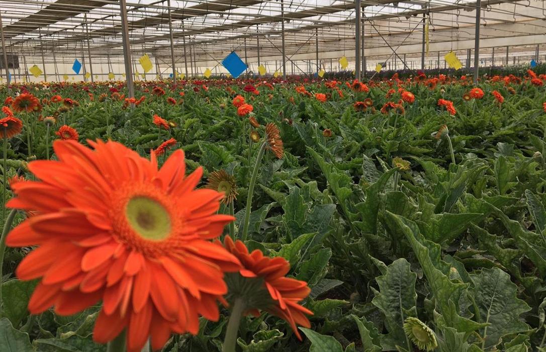 La Junta andaluza ayuda a sector de la planta ornamental y flor cortada… pidiendo que se regalen el Día de la Madre