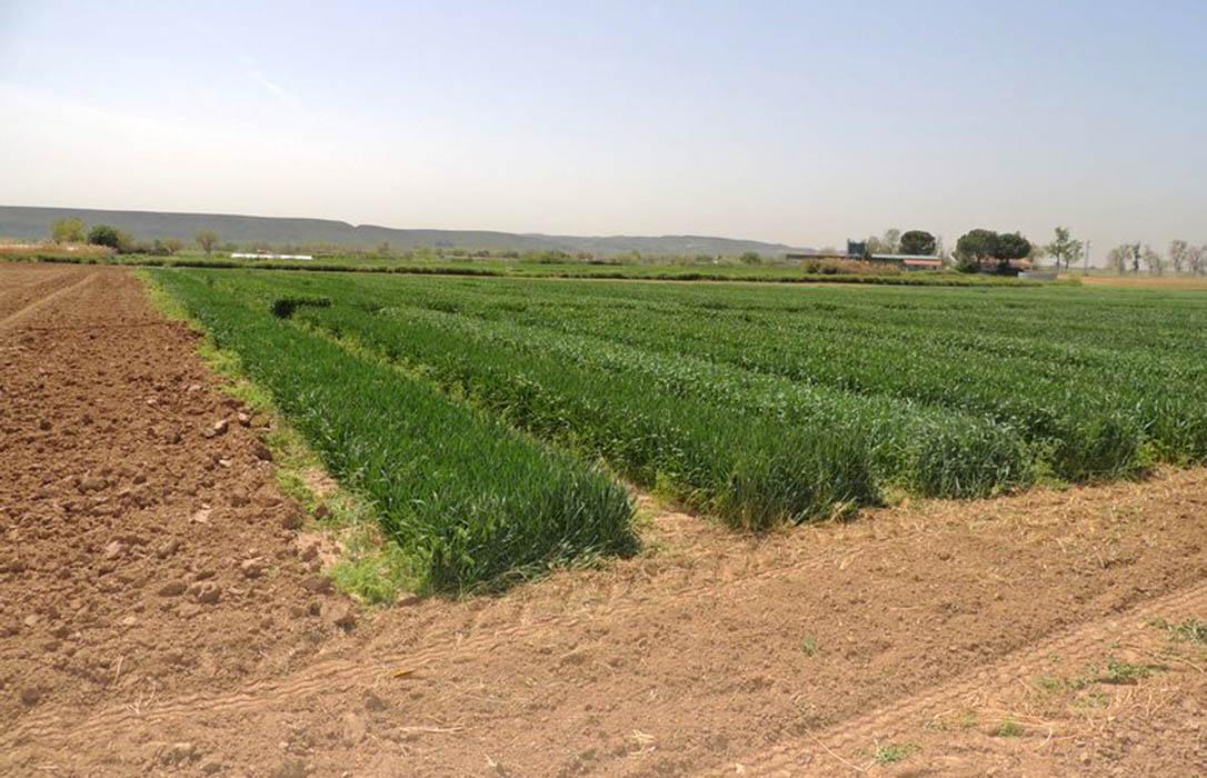 Los fabricantes consideran un error la propuesta europea de limitar el uso de fertilizantes a corto plazo
