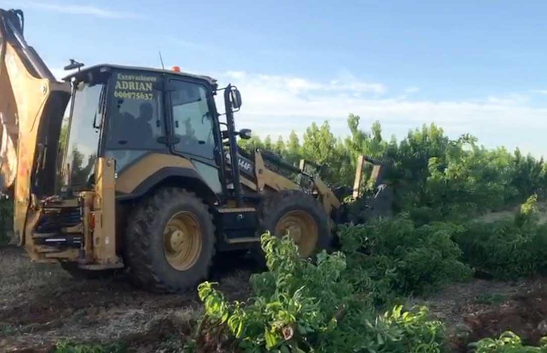 El 40% de los productores valencianos de frutales de hueso podría arrancar sus árboles tras la recolección por falta de rentabilidad