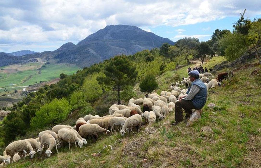 La CE propone dotar con 15.000 millones de euros adicionales al desarrollo rural para su estrategia verde