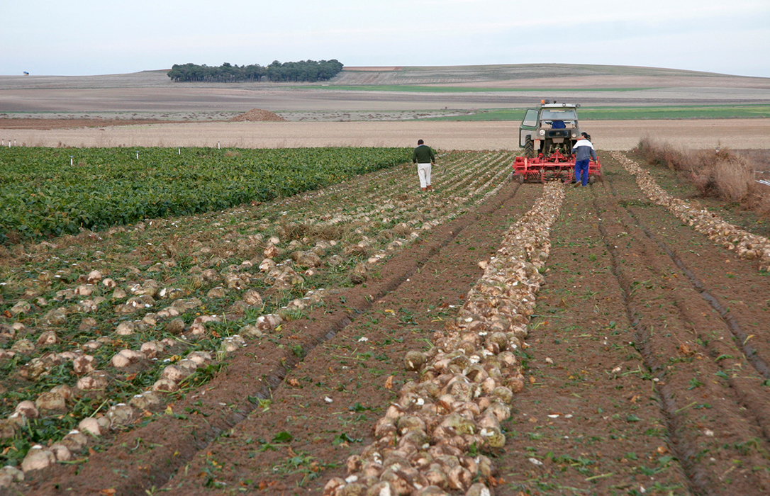 Denuncian a Azucarera porque «no tiene ninguna intención de cumplir la Ley de la cadena en sus contratos con los agricultores»