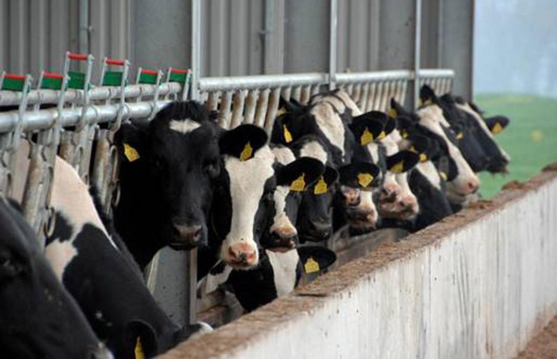 Castilla-La Mancha creará un observatorio de precios que aportará transparencia y garantía a los queseros y ganaderos de leche