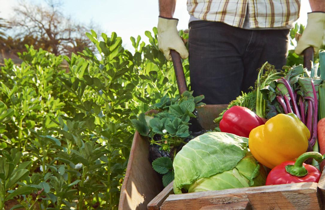 Autorizado el desplazamiento a los huertos y a la recolección de producciones agrícolas destinadas al autoconsumo
