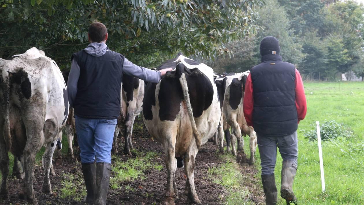 San Isidro Labrador: Patrón de los Valientes Agricultores y Ganaderos