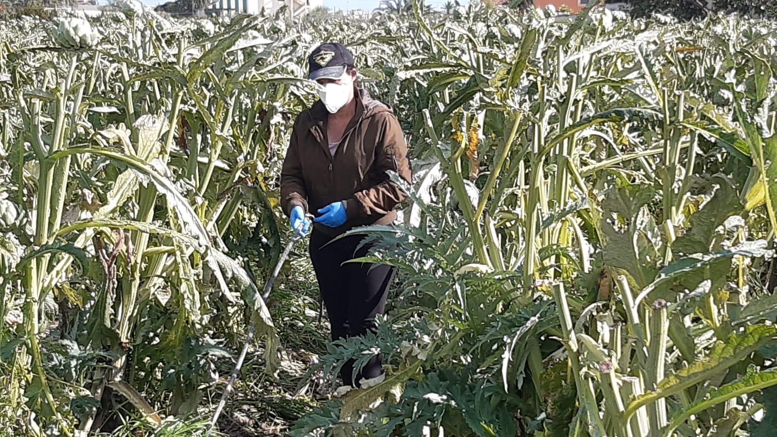 Cara y cruz por el Covid-19: La agricultura recupera su importancia pero el cierre de Horeca hunde demasiados sectores