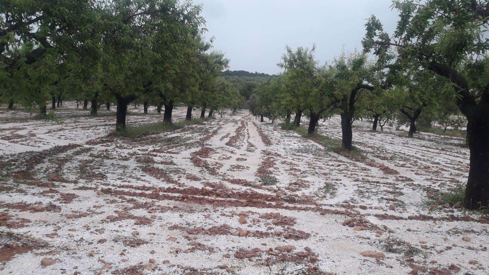 Las tormentas de granizo en la C. Valenciana deja 9 millones de pérdidas tras afectar a 4.000 hectáreas